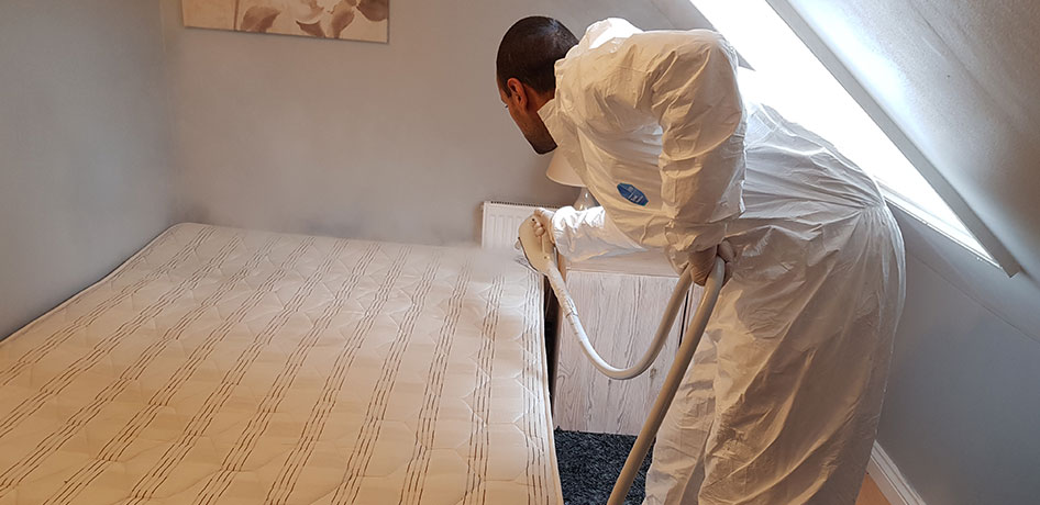 bed bug eradication, bed bug specialist, bed bug experts