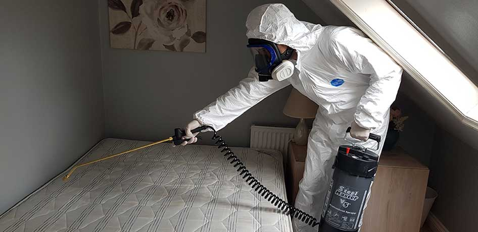 killing bed bugs with heat, bed bug removal heat treatment