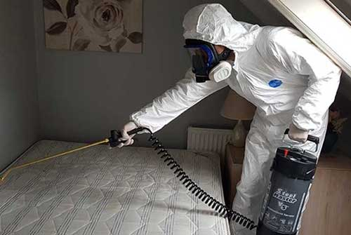 What laundry detergent kills bed bugs?